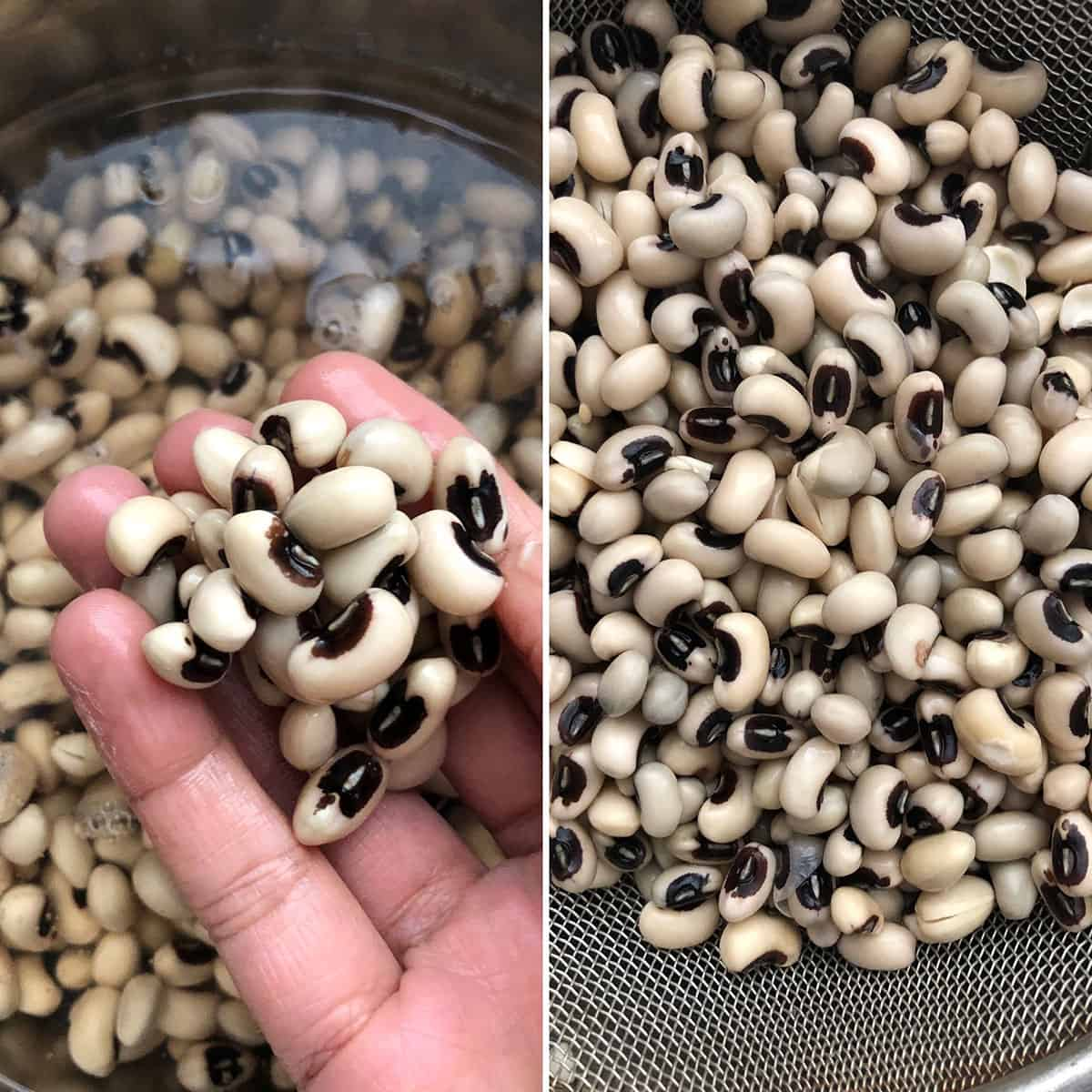 Side by side photos of before and after soaking beans