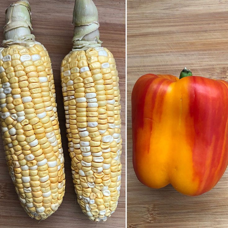 Two fresh corn and a red-yellow bell pepper